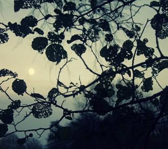 Melancholische Natur - Lcherige Bltter zeichnen ein Muster in den Himmel, der Mond im Hintergrund sorgt fr eine melancholische, mystische Stimmung.